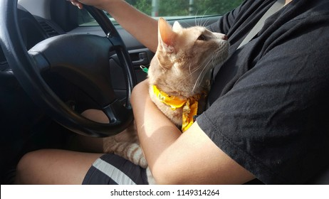 Cat's owner holds a orange cat in her arms inside a car during drive on the road.A bright orange cat wearing yellow fabric collar looking the owner.