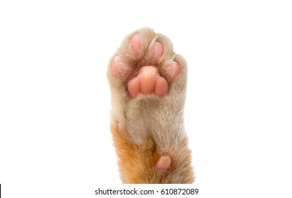 cat's paw isolated on white background