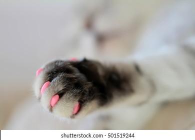 Cat's paw in macro
