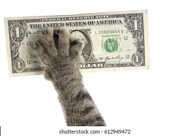 cat's paw pulls the dollar