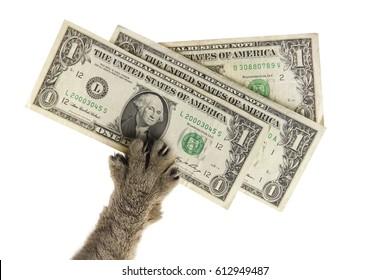 cat's paw pulls three dollars