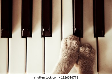 Cats paws lying on the piano keys close up cat playing.Retro vintage image