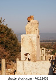 Cats perched on pillars in the ruins of ancient Ephesus.