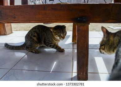 Cats quarrel. One cat sitting before another under the bench  and yelling.