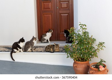 Cats sit by the door and wait for the food