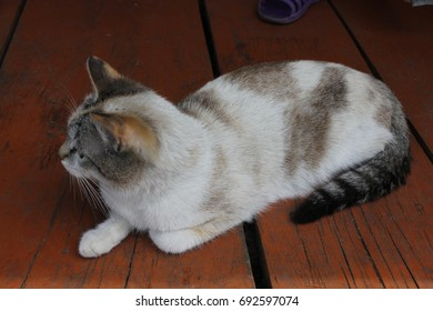 Cats are sitting on a wooden red porch