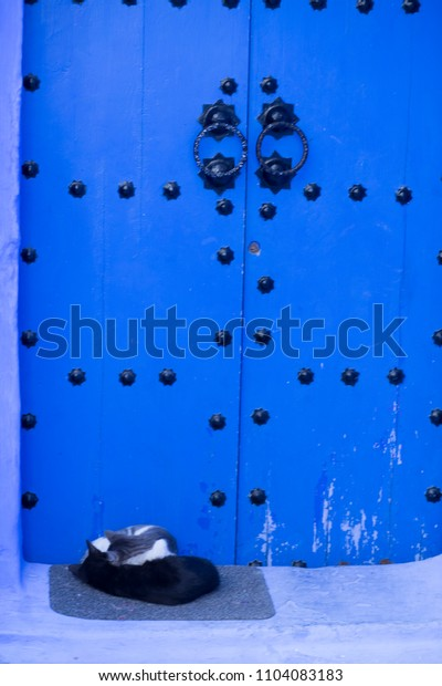 cats sleeping in front of a door in the streets and blue colors in the Moroccan village of Chefchaouen