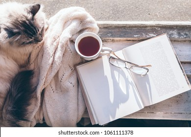 Cats sleeps in warm sunlight on window sill by opened book, cup of tea or coffee, glasses and knitted sweater. Cozy spring weekend concept, top view from above. The text on page is not recognizable.