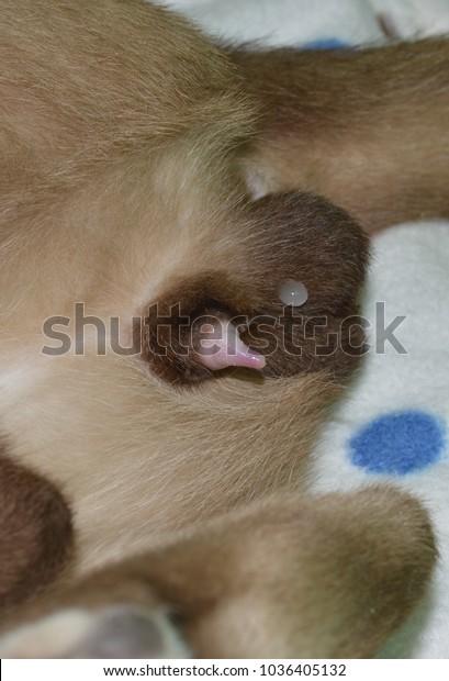 Katzensperma, Heiße junge Frau gif