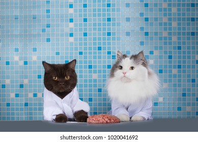 cats surgeons discuss brain surgery