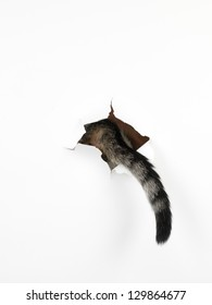a cat's tail coming out through a hole in a white paper, isolated