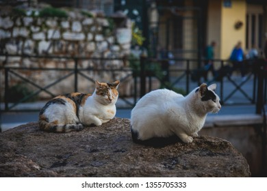 cats taking a nap on a rock in Athens, Greece