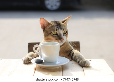 Cats are thought to something between drinking coffee.