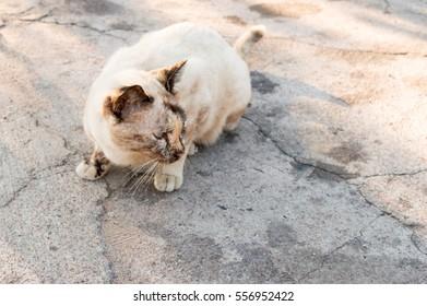 Cats thousand homes Thailand Thailand