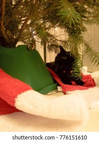 Cats under a Christmas tree