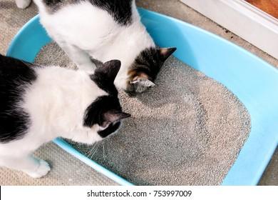 Poop Images Stock Photos Amp Vectors Shutterstock