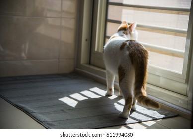 Cats wait