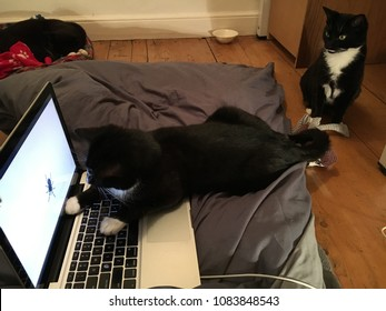 Cats Watching Television on the Computer