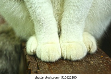 cats white paws sit on wooden country porch close up photo