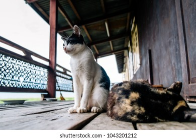 Cats in the wooden burmese buddhist monastery on the Inle lake, Myanmar