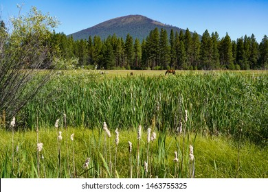 Cattails and horses in a meadow under Black Butte, central Oregon