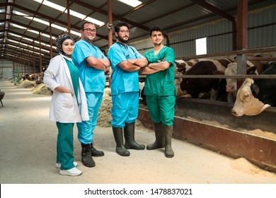 Cattle, cow animal farm veterinary. Agriculture industry, veterinarian or doctor communicating with cows in cowshed on dairy farm. Medical treatments, animal care.
