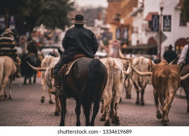 Cattle drive in the Fort Worth Stockyards