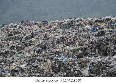 Cattle Egret and Dog survive on the garbage dump