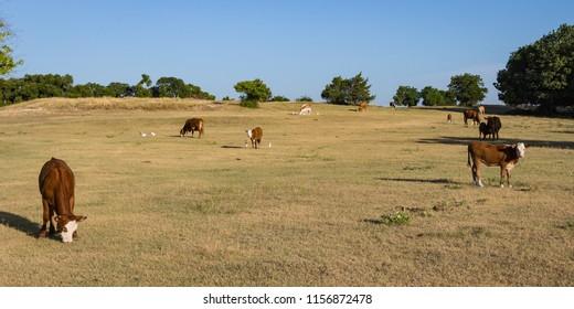 The Cattle Farm