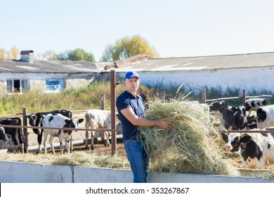 cattle farm worker
