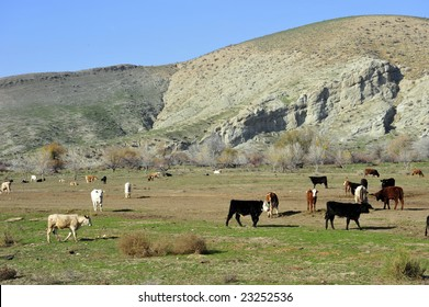 Cattle feed lot nestled against San Joaquin Valley (California) foothills
