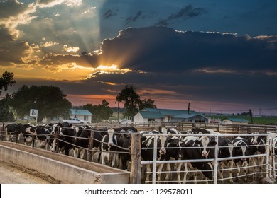 A cattle feedlot along highway 14 at sunset near Briggsdale, Colorado.