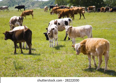 Cattle and grassland.