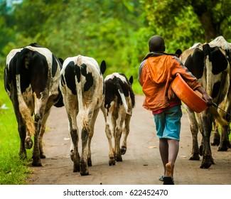 Cattle Herder - Fort Portal Uganda