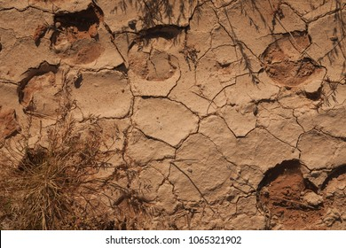 cattle hoof prints in cracked dry mud