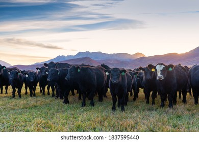 Cattle or livestock in the field all lined up.