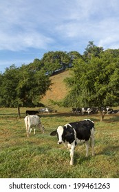 Cattle on the braziian parture