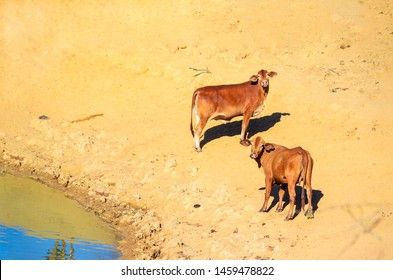 Cattle Back Images, Stock Photos & Vectors | Shutterstock