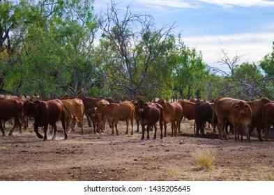 Cattle Back Images, Stock Photos & Vectors | Shutterstock