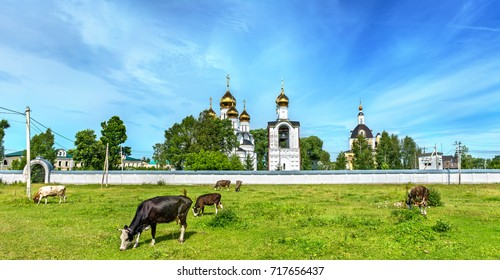 Cattle in pasture at St. Nicholas Monastery in Pereslavl-Zalessky - Yaroslavl Region, the Golden Ring of Russia