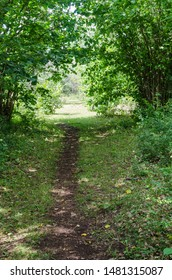 Cattle path in lush greenery in the countryside on the island Oland in Sweden