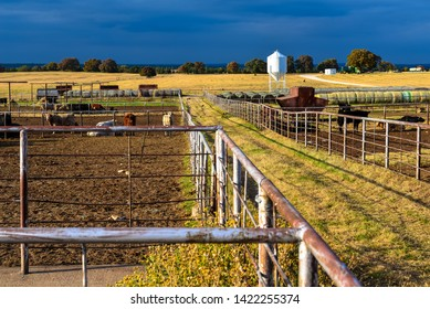Cattle ranch in America at golden hour.