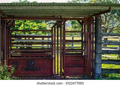 Cattle shute in yards ready to herd animals in tight quarters