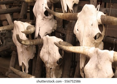 cattle skulls for sale in Santa Fa