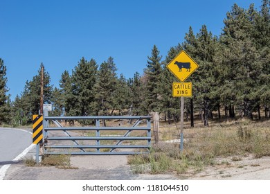 CATTLE XING SIGN
