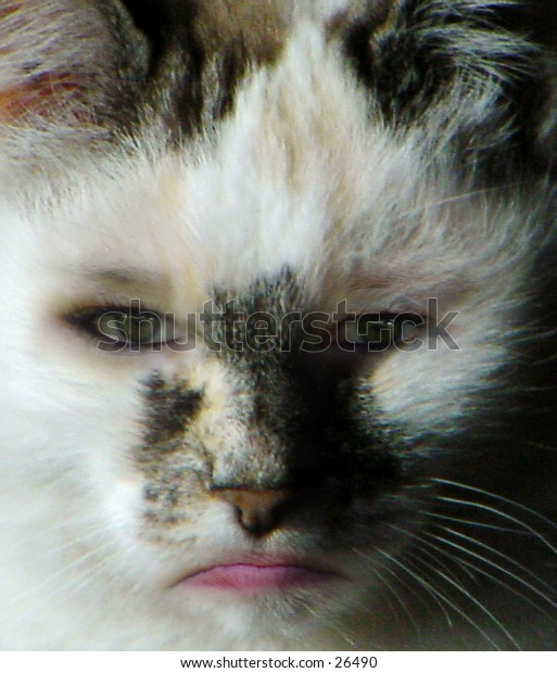 Cat-Woman, Composite of Girl's face and Cat face