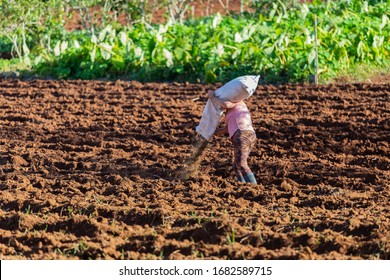 Caucasian Adult woman farmer fertilizing the land in Santana, Madeira island, Portugal
