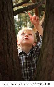 a caucasian boy climbing in a tree