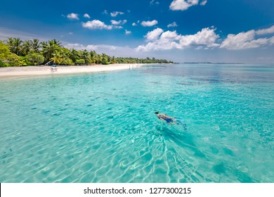 Caucasian couple of tourists snorkel in crystal turquoise water near Maldives Island. Perfect weather conditions at luxury resort beach scene, calm sea water, couple exotic water, underwater wildlife