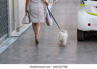 Caucasian elderly stylish woman walking her small white dog in a paved street of an old European town. She is carrying a white leather handbag in one hand and a plastic bag in the other hand.